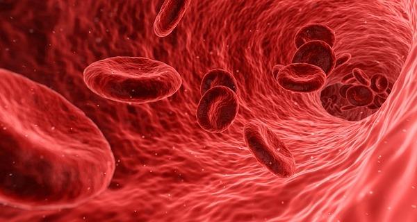 sangre creadora de vida