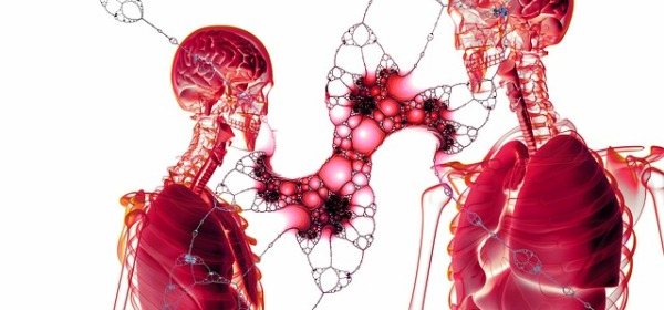 Estructura y función cuerpo humano